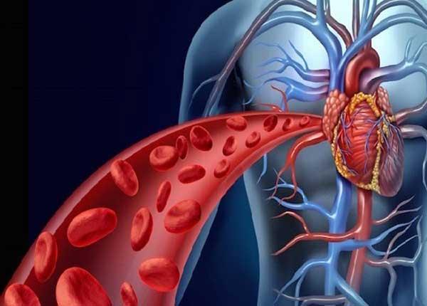 Rối loạn lipid máu là nguyên nhân dẫn đến những căn bệnh biên quan đến tim mạch