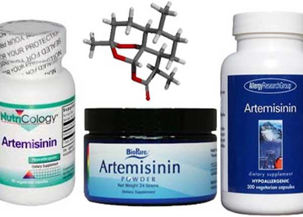 Thuốc Artemisinin được dùng để điều trị bệnh dị ứng