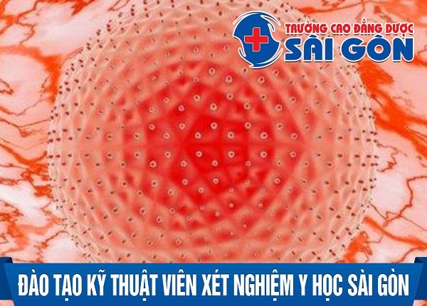 Đào tạo Kỹ thuật viên Xét nghiệm y học Sài Gòn