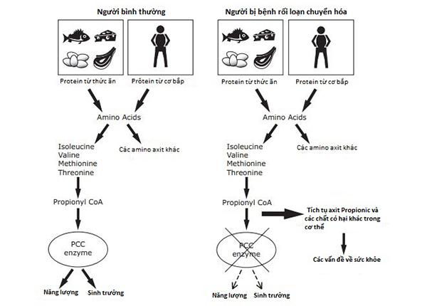 Rối loạn chuyển hóa di truyền là bệnh di truyền liên quan đến một số gen khiếm khuyết trong cơ thể