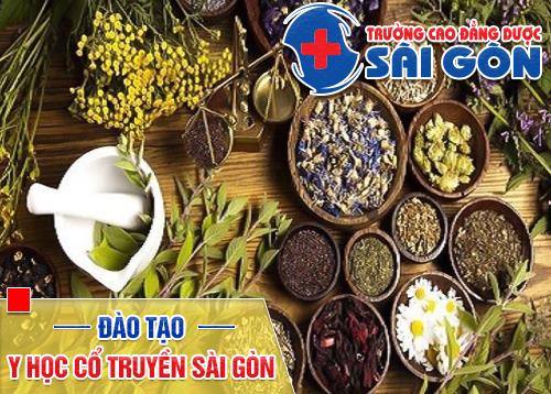 Đào tạo Y học cổ truyền uy tín tại Sài Gòn